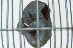 005. Detail of Embryos in 11 cages, 1996